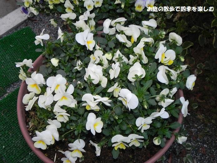 yoseue17_20140413093333d6b.jpg