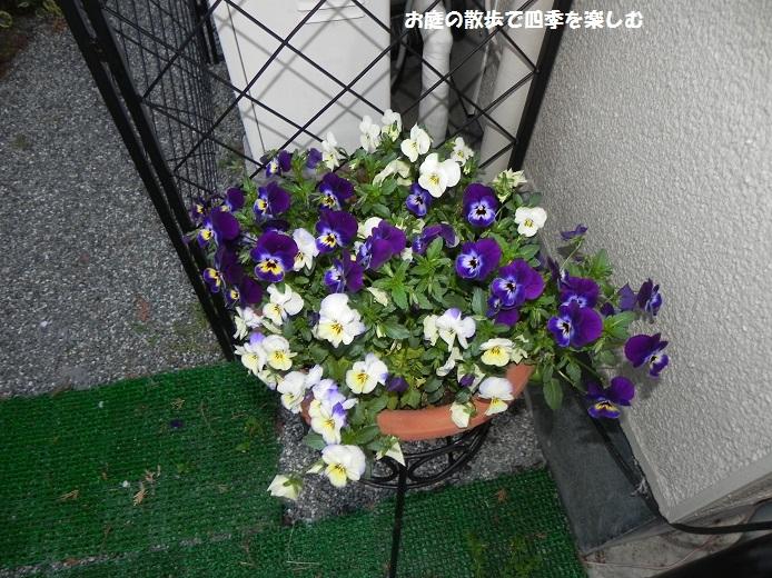 yoseue18_20140413093334b2d.jpg