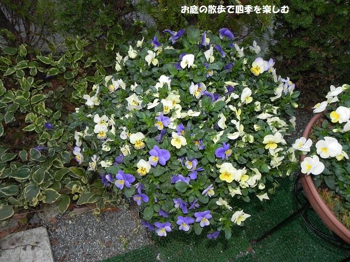 yoseue19_20140413093336c40.jpg