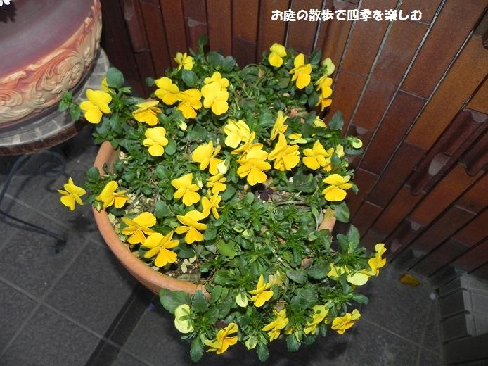 yoseue20_2014041309333737a.jpg