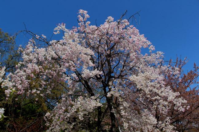 s9-2014-0415-x-8665.jpg