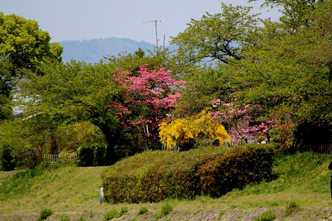 s9-2014-0425-x-0606.jpg