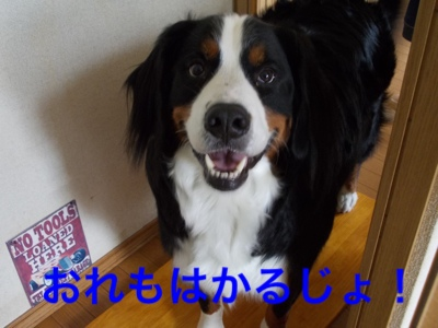 fc2blog_20140803164924aee.jpg