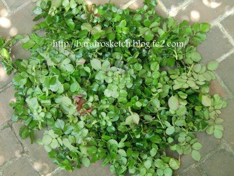 ブラインドの葉