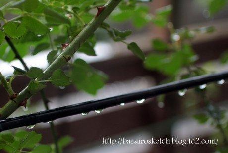 雨のしずく3