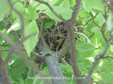 尾長鳥の巣3