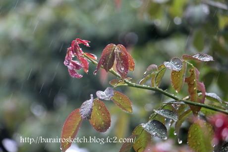 雨のピエール3