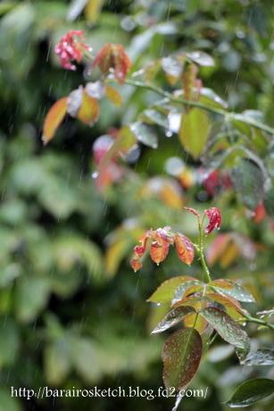 雨のピエール5
