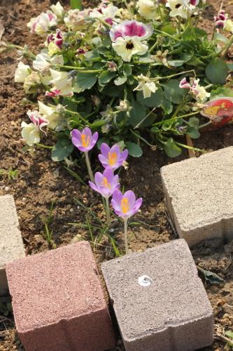 花壇ブロック