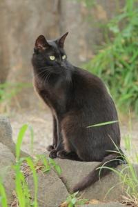 黒猫。_800