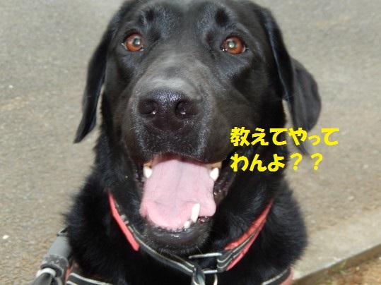 びぃなむ74-09