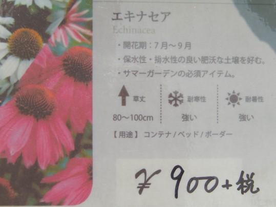 びぃなむ63-03