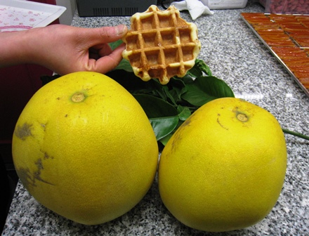 grapefruits-asakusa.jpg