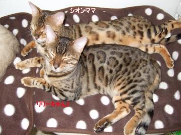 上:シオンママ/下:リリーちゃん