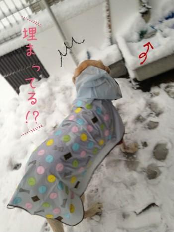blog1_20140213223549687.jpg