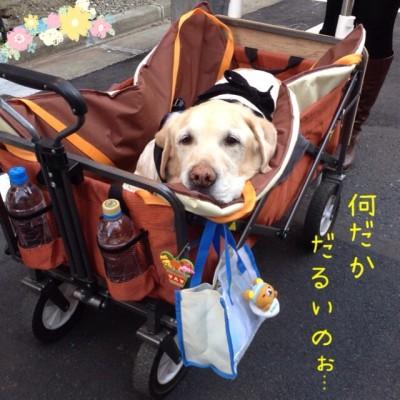 blog1_20140423165234285.jpg