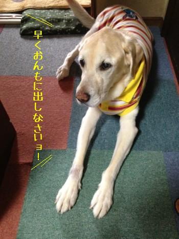 blog5_20140517005719d4a.jpg