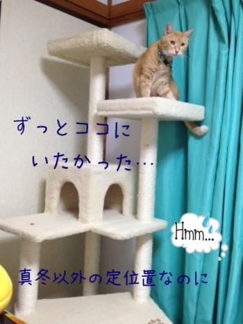 blog9_2014052122484588f.jpg