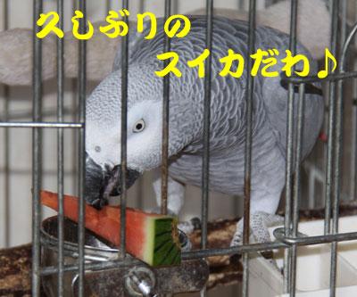1_カンナスイカ1