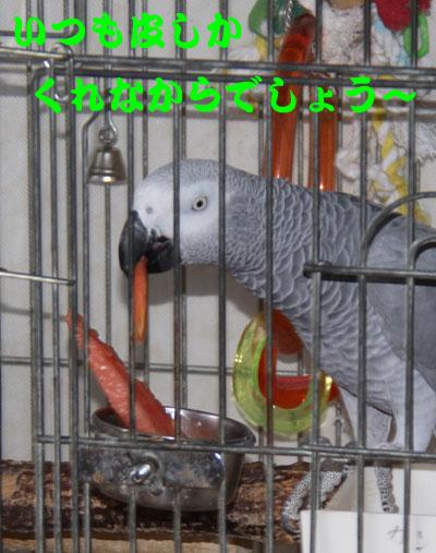 5_カンナスイカ2