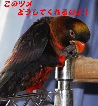 5_ピンナ文句