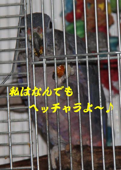 11_ビオパームオイル