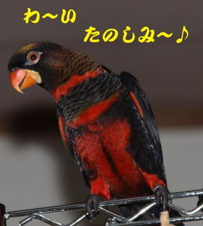 15_ピンナ4