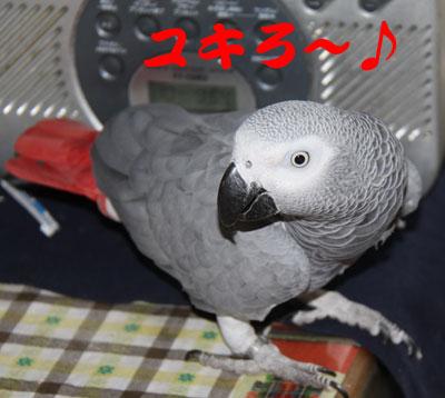 1_ユキロー