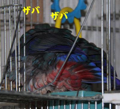 1_毒キノコ1