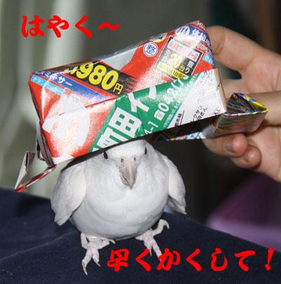 7_かくして