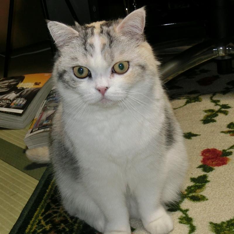 s-猫もビックリ