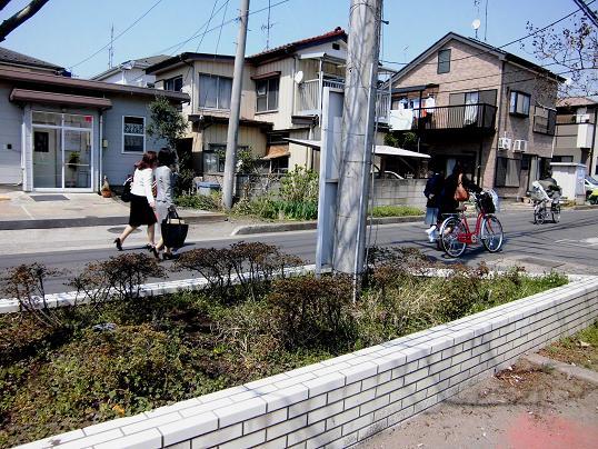 14.4.8琵琶島公園ブログ用 (1)