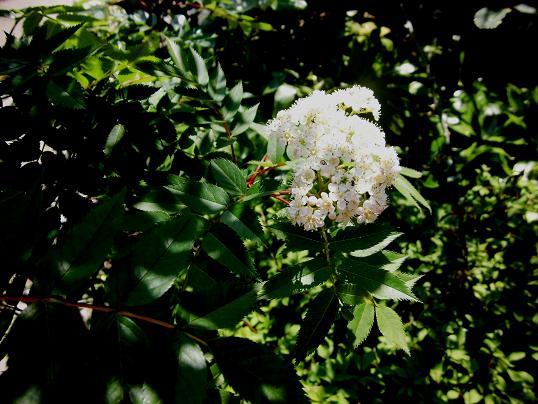 1 14.4.25秋葉原。庭の花木、電車の最後尾  (15)
