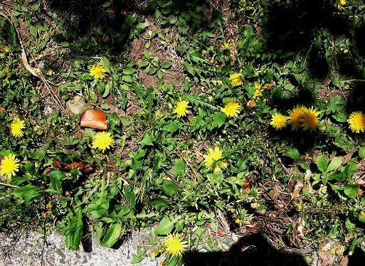4 14.4.25秋葉原。庭の花木、電車の最後尾  (26)