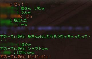 4/24 またまた鳥さんハッケン!