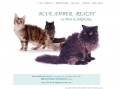 cattery web site image