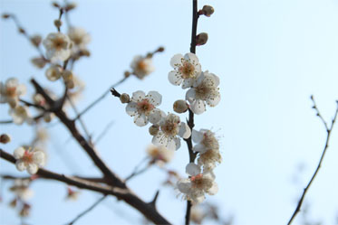 春の息吹_03