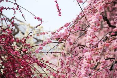 春の息吹_04