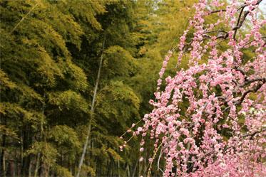 春の息吹_06