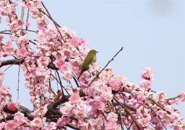 春の息吹_07