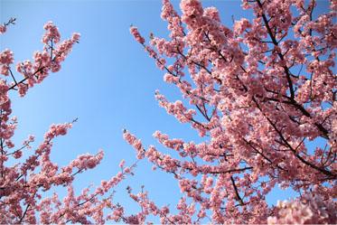 春の息吹_08