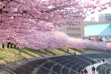 春の息吹_09