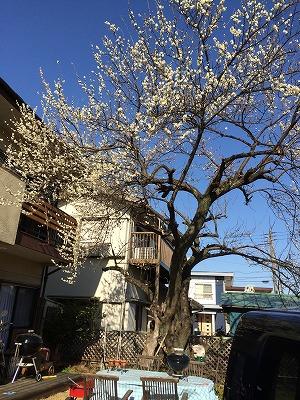 写真 2014-03-11 15 10 28