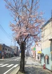 桜4-24_600