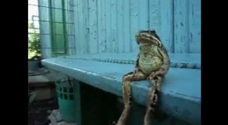 human-like-sitting-frog02-480x263[1]