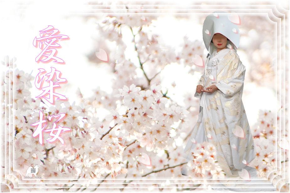 愛染桜 ♪