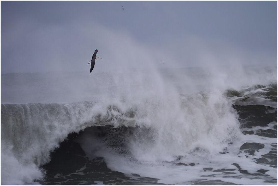荒海のカモメ
