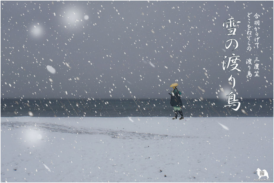 雪の渡り鳥♪