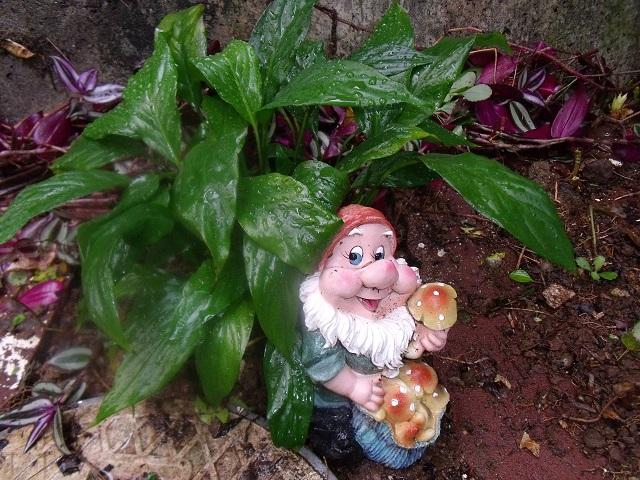 もう一人の庭の友達