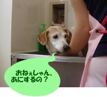 13_07_20_01_.jpg